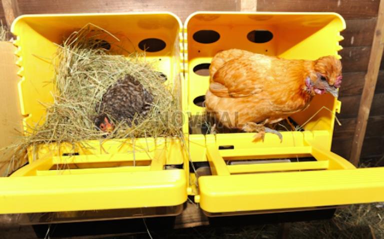 Гнездо куриное с яйцесборником 8